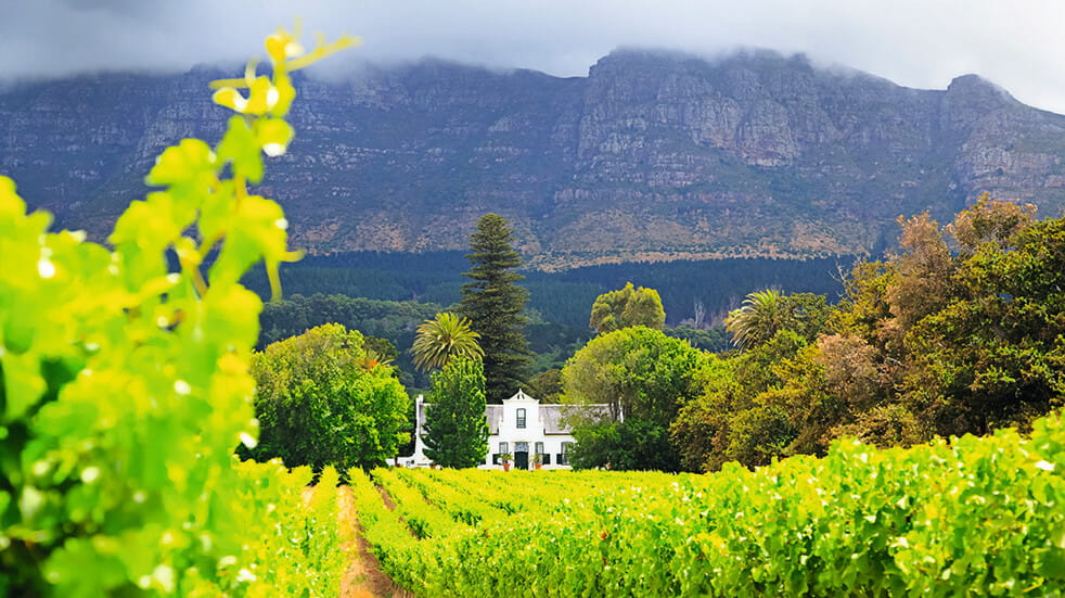 Why a Western Cape roadtrip is a feast for the senses vineyard winery